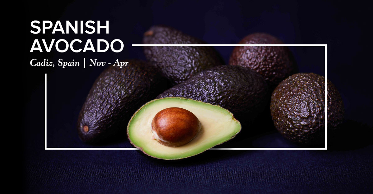 Spanish Avocado